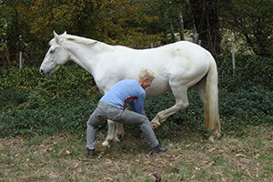 equine_osteopathy